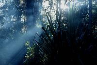 tropical primeval forest near Wamena, West Papua (2002)
